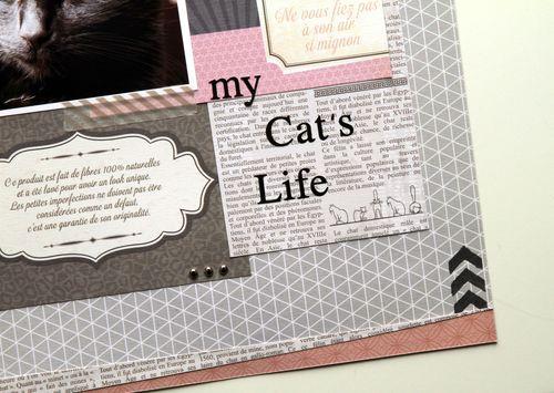 My cat's life détails